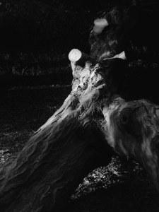 isolated tree women